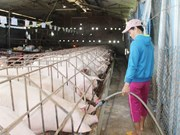 State Bank moves to aid pig farmers