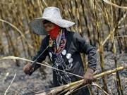Thailand sugar production rises