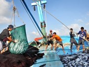 MARD: China's fishing ban in Vietnam's waters is valueless