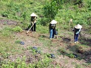 Thua Thien – Hue develops sustainable afforestation