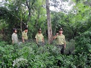 Forest coverage reaches over 40 percent: ministry