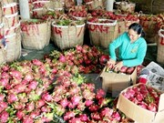 Vietnamese fruits conquer Japanese market