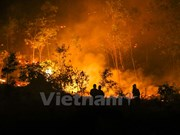 Fire destroys 100ha of forest in Soc Son district