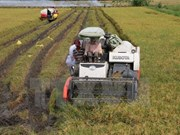 Thua Thien-Hue focuses on agricultural restructuring