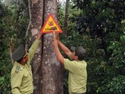 Sustainable forests project launched