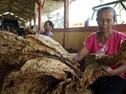 Tobacco threatens sustainable development goals of Indonesia