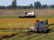 Vietnam targets exporting 4 million tonnes of rice by 2030