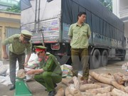 Thanh Hoa seizes nearly 2 tonnes of suspected ivory