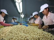 Material supply matters to cashew industry of Vietnam