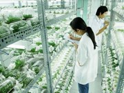 Binh Phuoc eyes hi-tech agricultural cooperation with Japan