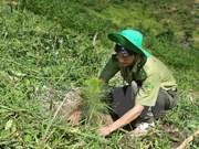 Ca Mau preserves, develops forests