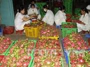 Binh Thuan looks to expand VietGap dragon fruit area