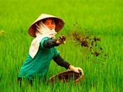 Vietnam wastes at least 1 billion USD yearly on over fertilisation