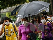 Bird flu, swine flu break out in Myanmar
