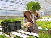 Japanese, Vietnamese enterprises seek cooperation opportunities