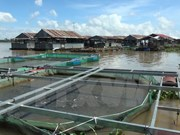Thua Thien – Hue's farmed fish, seafood output surges