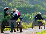 Hai Duong has additional 13 new-style rural areas