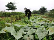 Heat, urbanisation hit capital's farms