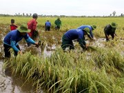 Early floods threaten Mekong rice fields