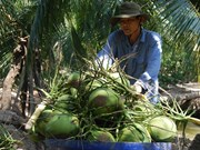 Vietnam pushes up fruit exports