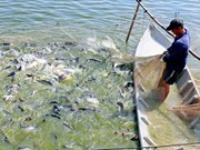 New programme to tighten control of catfish exported to US