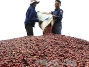 Tata builds freeze-dried coffee plant in Vietnam