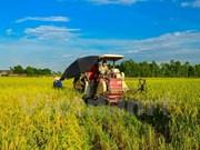 Vietnam to reform rice production, improve exports