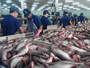 Strong marketing strategy needed to bolster tra fish exports