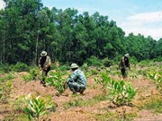 Localities step up forest planting