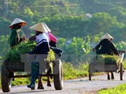 Quang Nam targets additional 55 new-style rural communes