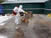 Vietnam takes preventive measures against bird flu