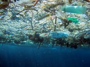 East Asian countries join hands to fight plastic waste in ocean