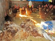 Vietnam to produce own avian influenza vaccine from 2018