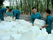 Vietnam's top rubber firm valued at 177.8 million USD