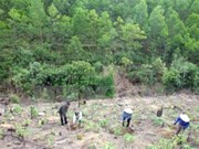 Tuyen Quang fulfills afforestation plan for whole year