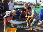 Thua Thien – Hue: offshore fishing fares well