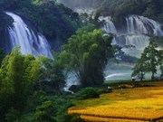 Festival in honour of Vietnam's widest waterfall