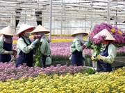 Lam Dong has more high-tech flower, vegetable growing project