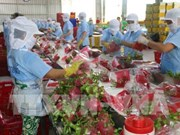 More Vietnamese dragon fruits shipped to Australia