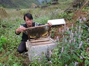 Ha Giang seeks solutions to sustainable beekeeping development