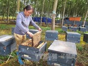 Ways sought to boost honey exports to EU
