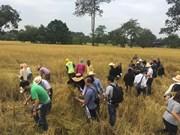 Thailand works to develop organic rice market