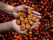 Malaysia, Indonesia to counter EU discrimination against palm oil