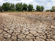Mekong Delta provinces ensure schedule of climate change projects
