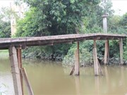 Quang Tri commuters risk lives on unsafe bridges