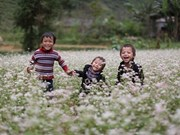 Festival honours buckwheat flowers in Ha Giang
