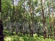 Vietnam records progress in forestry development