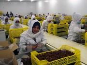 Algeria to export dates to Vietnam
