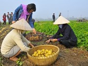 Vietnam yet to sow seeds of low carbon rice