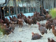 New avian flu outbreak hits Philippines